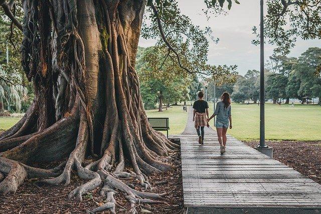 tree, park, nature